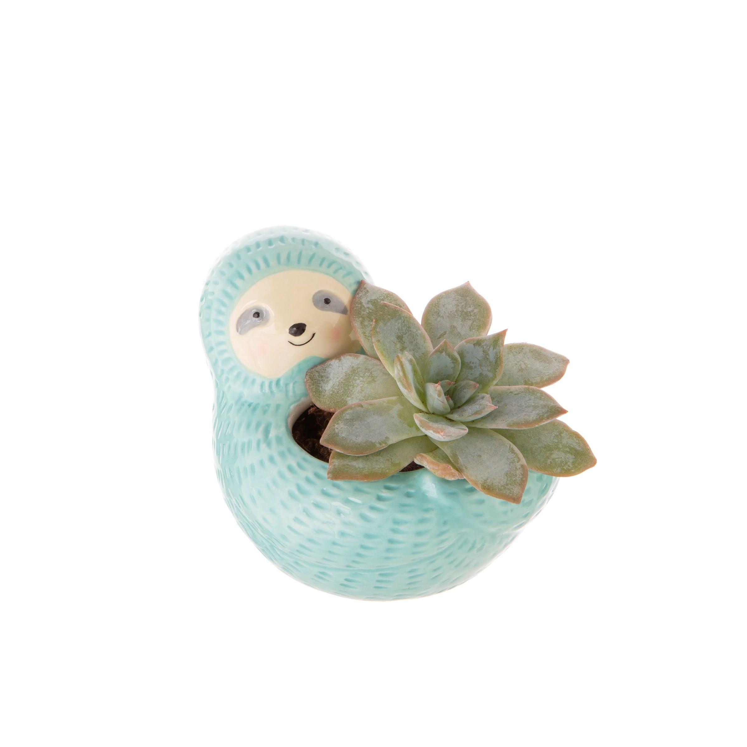 planter sloth blue